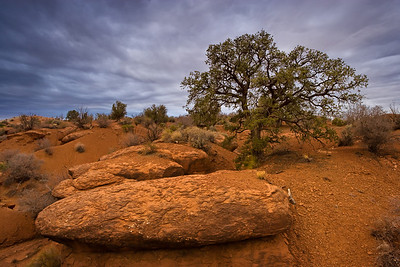 Grand Staircase Escalante National Monument - Utah, USA