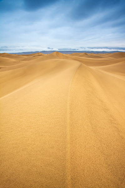 The Line in the Sand - Varina Patel