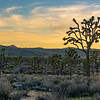 Dusk at Joshua Tree