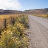 Roadside Blooms in the Desert