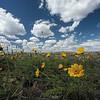 Spring bloom in the Susanville Desert