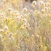 Fall Flowers in the Smoke Creek Desert