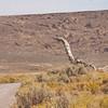 Dinosaur Stump
