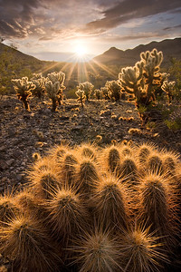 Desert Flora and Sunstar, South Mountain Park