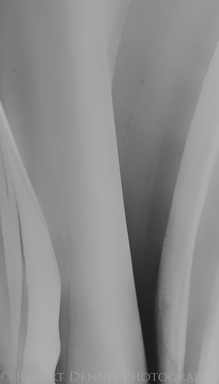 Photographing Peregrine Falcons at Pt. Fermin & Pt. Vincente