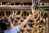 Photo Day at LA Zoo 2016