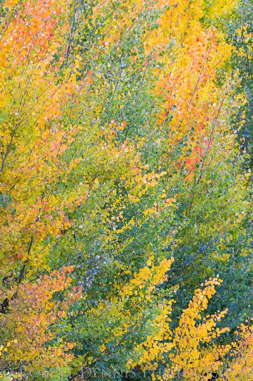 Fall in the Eastern Sierras