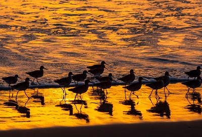 sunset birds resized