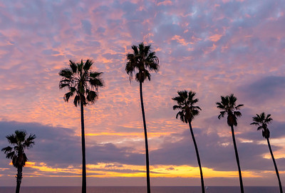 sunset palm trees resized