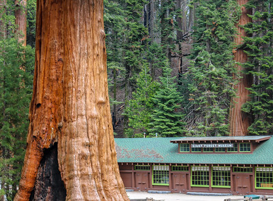 sequoia parents-9235
