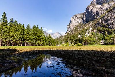 sequoia-3098