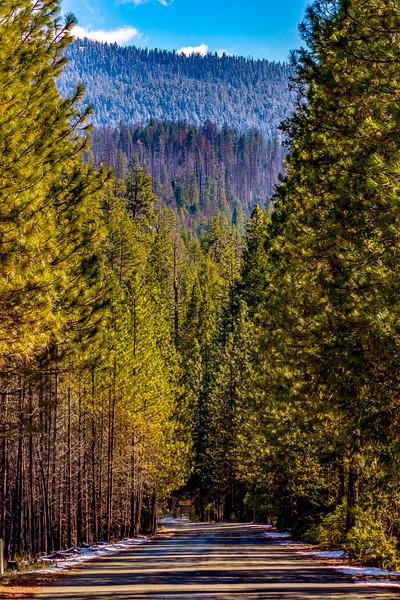 yosemite and sequoia--14