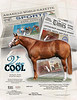 Cool ad for GoHorseShow