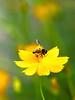 Honey to da bee