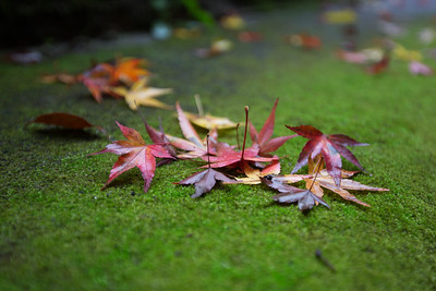 Maple & Moss • Kyoto