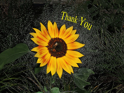 A Sunflower Growing In The Garden, Ric Evoy Rictographs Images