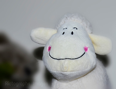 Happy Sheep, Rictographs Images