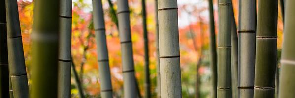 Bamboo Autumn