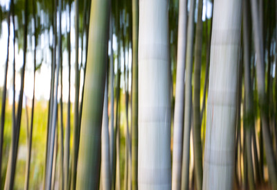 Bamboo Abstract II