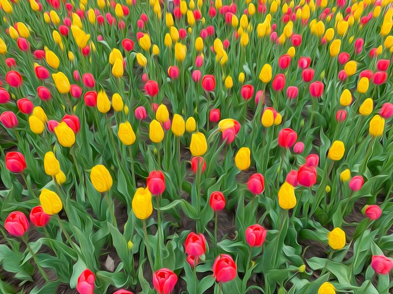 Groovy Blooms