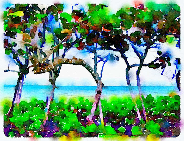Seagrapes Waterlogue