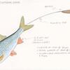 Fish prop details.