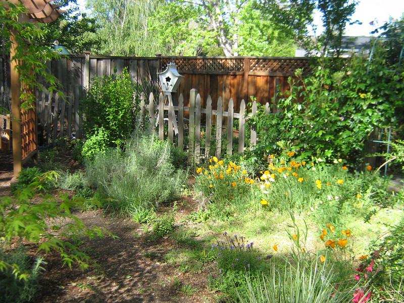 My native garden, April (2 months later!)