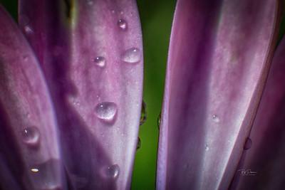 Petals and drops