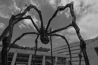 Spider at the Museum