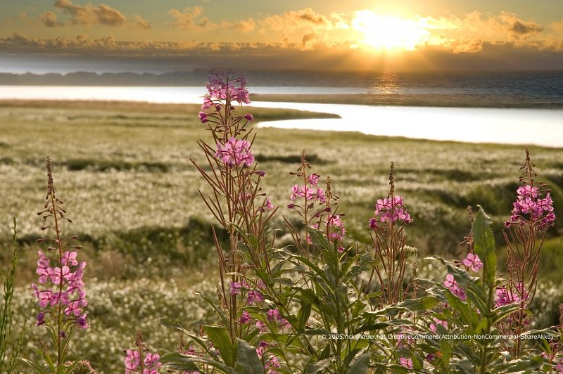 Siletz Bay wild flowers montage with a beautiful Oregon sunset (ND70_2005-07-12DSC_1615-SiletzBayPurpleFlowers-warm-1623-montage-(cc)-3.jpg) ©2005rick@kruer.net-CreativeCommons(Attribution-NonCommercial-ShareAlike)