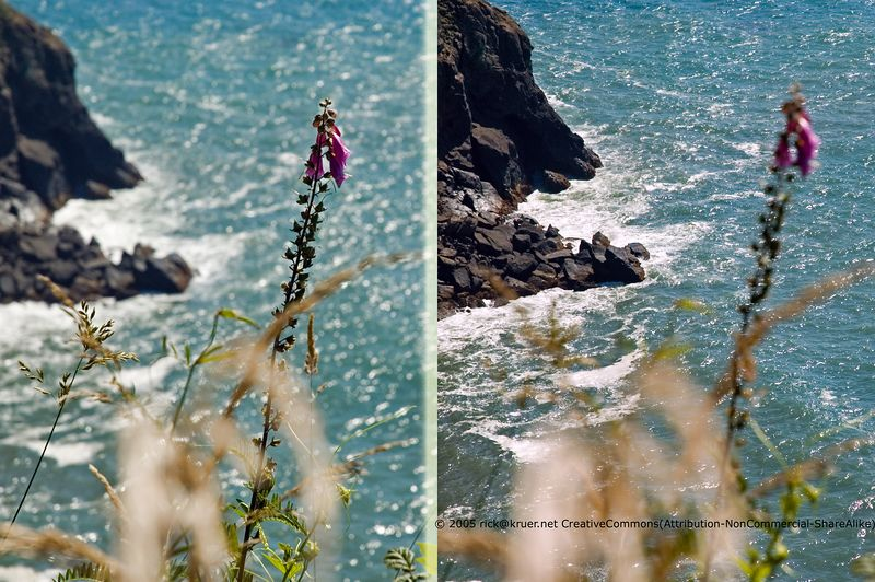 Wildflower Ocean View Collage (ND70_2005-07-15DSC_1781-OceanView-PurpleFlower-nice-collage-1782-(cc)-2.jpg) ©2005rick@kruer.net-CreativeCommons(Attribution-NonCommercial-ShareAlike)