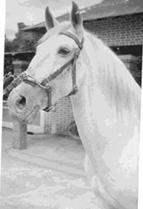 Riley  No meu tempo o Riley era o soba da cavalariça... deu uma dentada à Zélinha para a tirar doutro cavalo (o Azedo), por ciúmes. Victor Valente