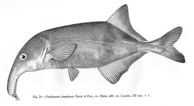 peixe do Luembe