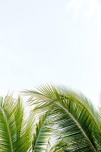 BreathlessRiviera-MexicoWedding-JanaMarie-008
