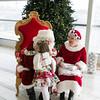 2016Dec3-Christmas-Infiniti-JanaMarie-0018