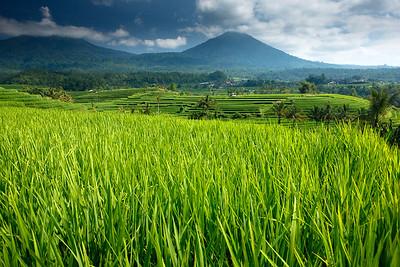 Bali 2008 01