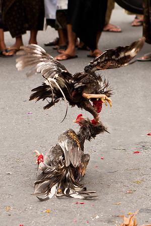 Bali 2011 - 26