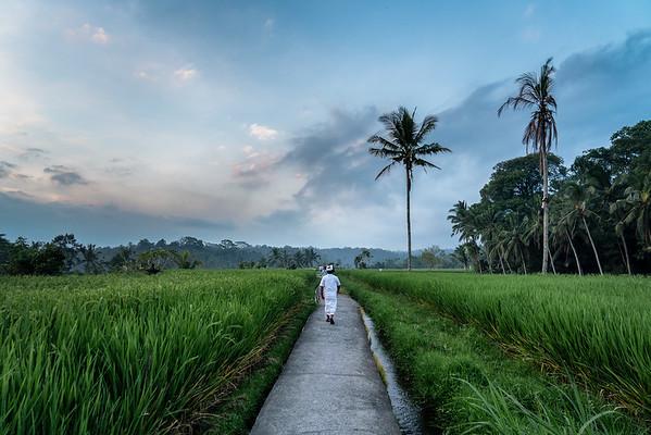 Rice Fields-09