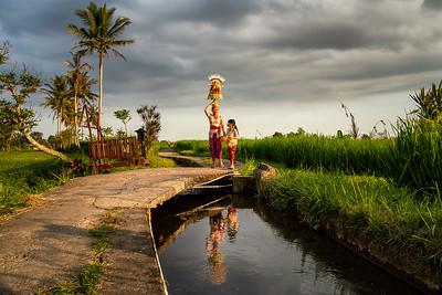 Rice Fields-02