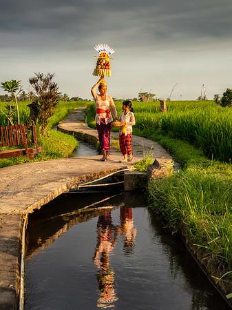 Rice Fields-01
