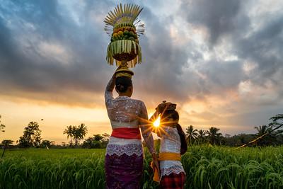 Rice Fields-07