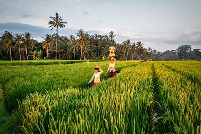 Rice Fields-06