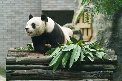 Fuzhou 08
