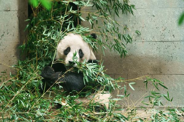 Fuzhou 09