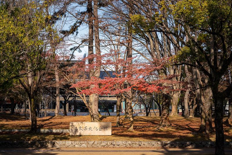 Nara 18