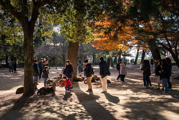 Nara 17