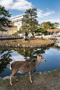 Nara 13