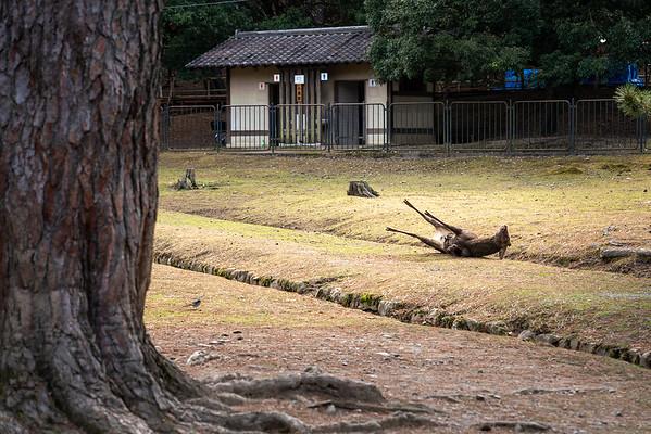 Nara 09