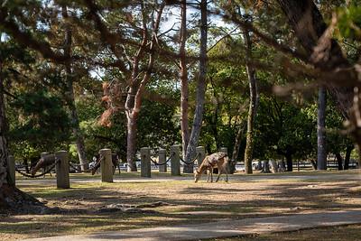 Nara 15