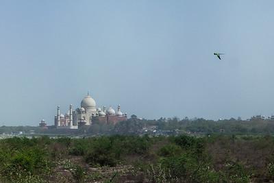 Taj Mahal 08
